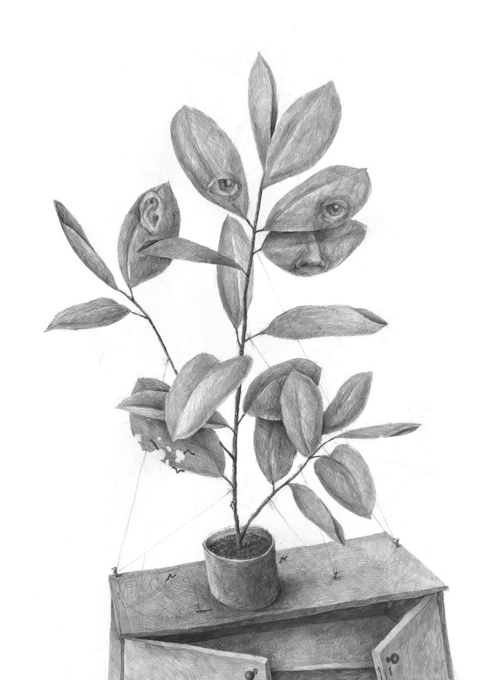 Stefan Zsaitsits Drawing Zeichnung Gummibaum Rubber Tree